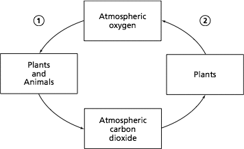 Triand edit test the carbon dioxide oxygen cycle is diagrammed below 356x218 what processes belong in the numbered parts of the diagram ccuart Images